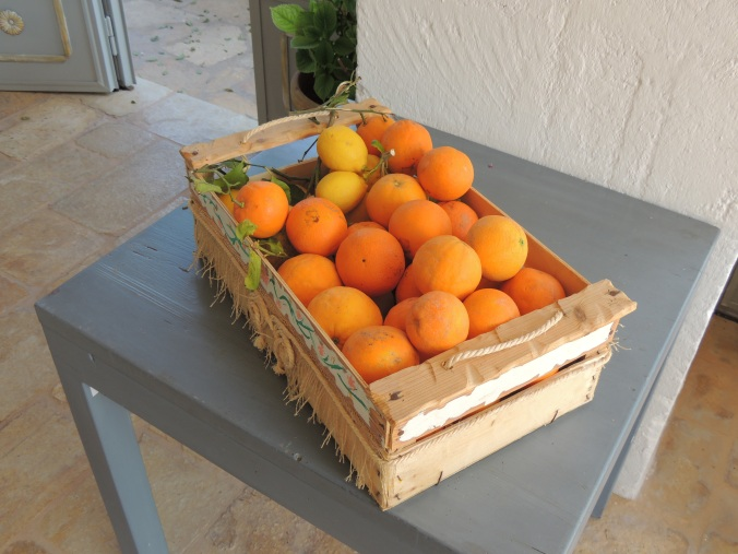 Le arance coltivate in masseria